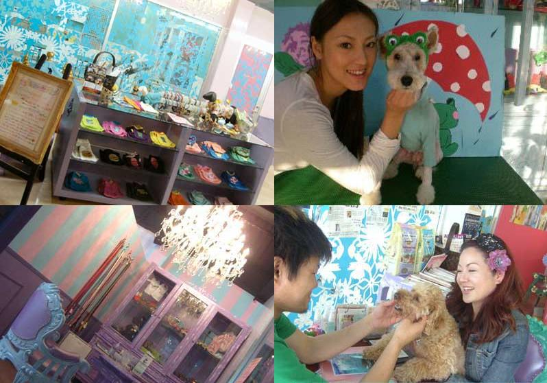 DOGSPA/Goods/Interiors CRAZY COLOR ドッグスパ・トリミングサロン・首輪・犬服・犬グッズ販売 愛知県豊橋市