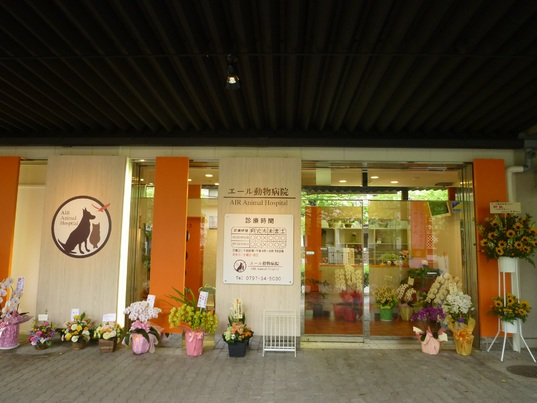 夜間対応の救急動物病院一覧|兵庫県 神戸市・24 …
