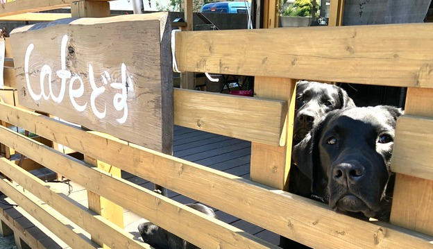 Cafeどす カフェ、犬OK 東京都福生市南田園