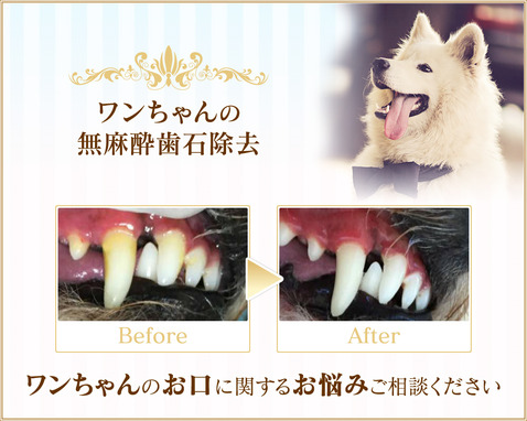 Oral Care for Dog🐾chouchou �����s ���������Ώ��� ���������̂���̃P�A���T�����ł��B �����s�����s�V�h��