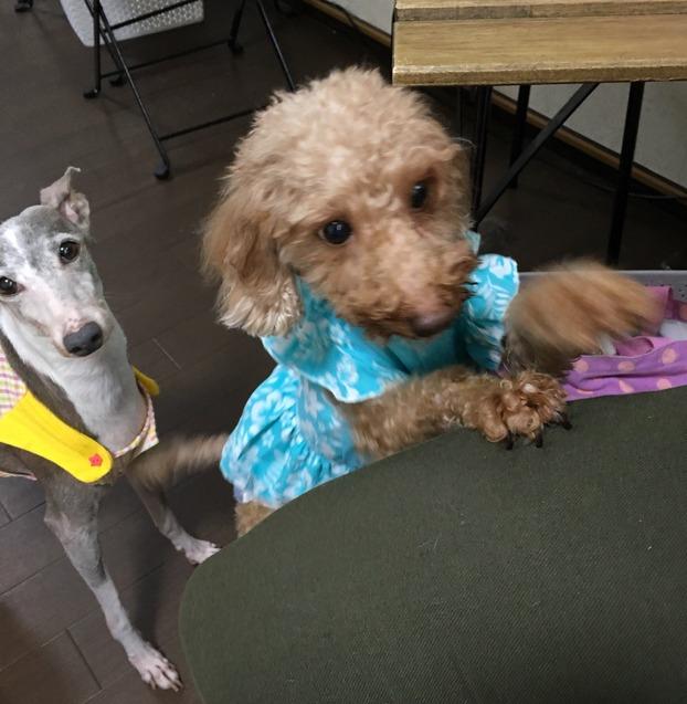 東京都八王子市のドッグカフェ 飲食店 保護犬カフェ西八王子店