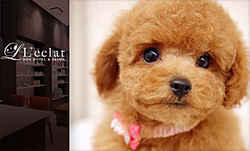 Dog Hotel & Salon  L�feclat �y���N���z
